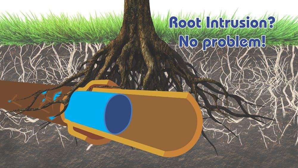 Tree Root Intrusion